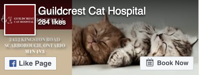 Facebook Like - Guildcrest Cat Hospital
