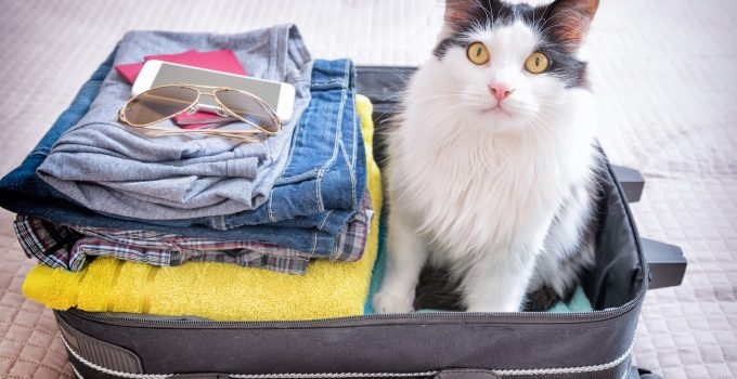 A Guide To Vacation With Your Cat