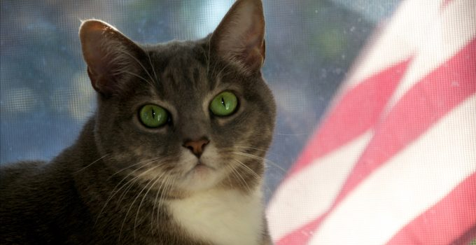 July 4th Pet Safety Cats