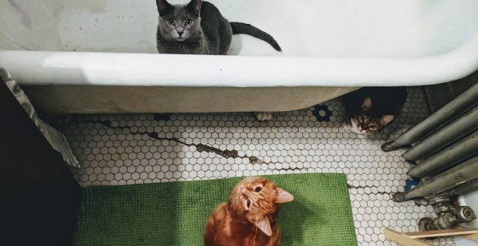 Swimming With Your Cat